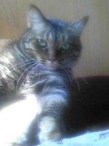 猫マンガ  「猫12匹といれば」 -110809_1424~03.JPG