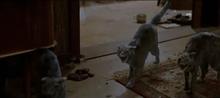 三角絞めでつかまえて-襲い来る猫!