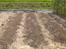 耕作放棄地をショベル1本で畑に開拓!週2日で10時間の野菜栽培の記録 byウッチー-110809たまねぎ苗床準備と太陽熱処理方法08