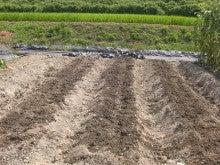 耕作放棄地をショベル1本で畑に開拓!週2日で10時間の野菜栽培の記録 byウッチー-110809たまねぎ苗床準備と太陽熱処理方法06