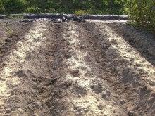 耕作放棄地をショベル1本で畑に開拓!週2日で10時間の野菜栽培の記録 byウッチー-110809たまねぎ苗床準備と太陽熱処理方法02