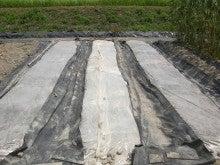 耕作放棄地をショベル1本で畑に開拓!週2日で10時間の野菜栽培の記録 byウッチー-110809たまねぎ苗床準備と太陽熱処理方法11