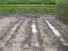 耕作放棄地をショベル1本で畑に開拓!週2日で10時間の野菜栽培の記録 byウッチー-110809たまねぎ苗床準備と太陽熱処理方法07