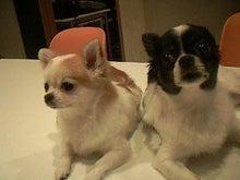 $Minnie's Room-2犬