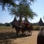 馬車が主要交通