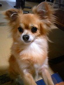 Happy Paws預かり日記-DVC00324.jpg