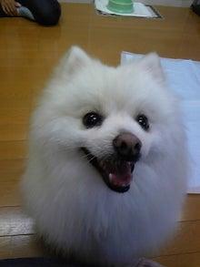 Happy Paws預かり日記-DVC00081.jpg