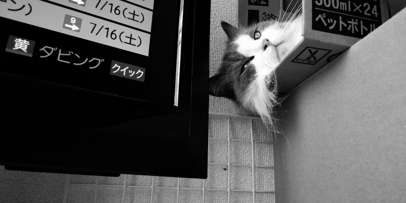 $『わが愛は猫である』