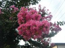 仙台外構エクステリア・造園ガーデンのいい風ブログ