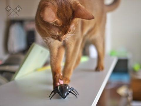 $Peek-a-Meow