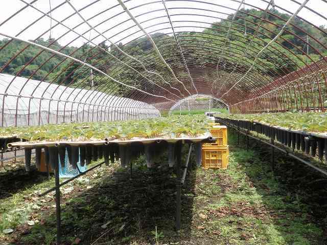 まーくんの小部屋★福岡で頑張る専業農家