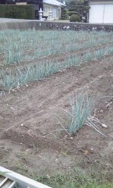 東温市から送るアクリの農業日誌-110824_1218~01.jpg