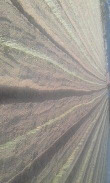 東温市から送るアクリの農業日誌-110816_1716~01.jpg