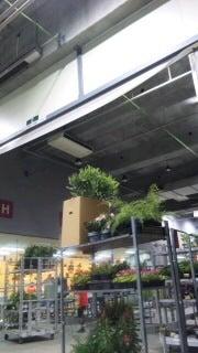 ダナエの花レッスンブログ-SH3E1253.jpg