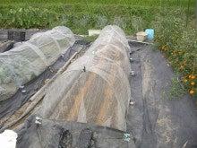 耕作放棄地をショベル1本で畑に開拓!週2日で10時間の野菜栽培の記録 byウッチー-110822大根第1陣目種蒔き12
