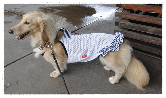 旅犬Lani&Leaのほほん風船記-DOG DEPT CAFE