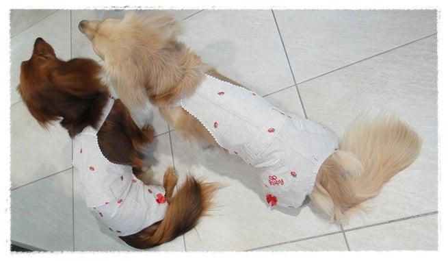 旅犬Lani&Leaのほほん風船記-Amiciにて