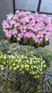 ダナエの花レッスンブログ-SH3E1255.jpg