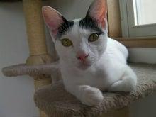 「猫やとらじ」の十猫十色