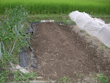 耕作放棄地をショベル1本で畑に開拓!週2日で10時間の野菜栽培の記録 byウッチー-110823メイン畑空き畝天地返し02