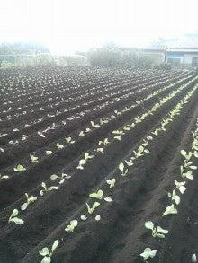 神奈川県 三浦市 伊藤農園のブログ-201108280653000.jpg
