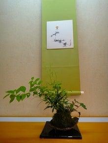 のりすけのつれづれ日記~盆栽とパン屋巡り~-2011年8月応用コース