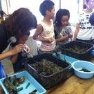 真珠の養殖体験&干物工場見学ツアーの記事より