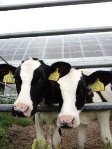 北海道便り・大きくて優しい牛たちとの生活-110830_0557~02.jpg