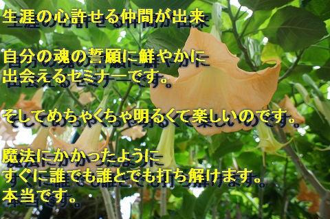 $ハワイアンマナ☆光溢れる島より愛をこめて