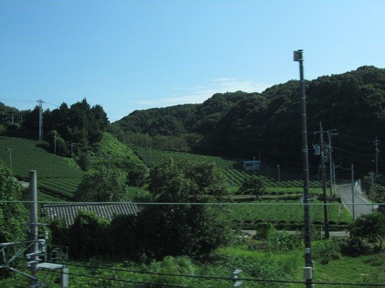 ⇒掛川 茶畑 新幹線から