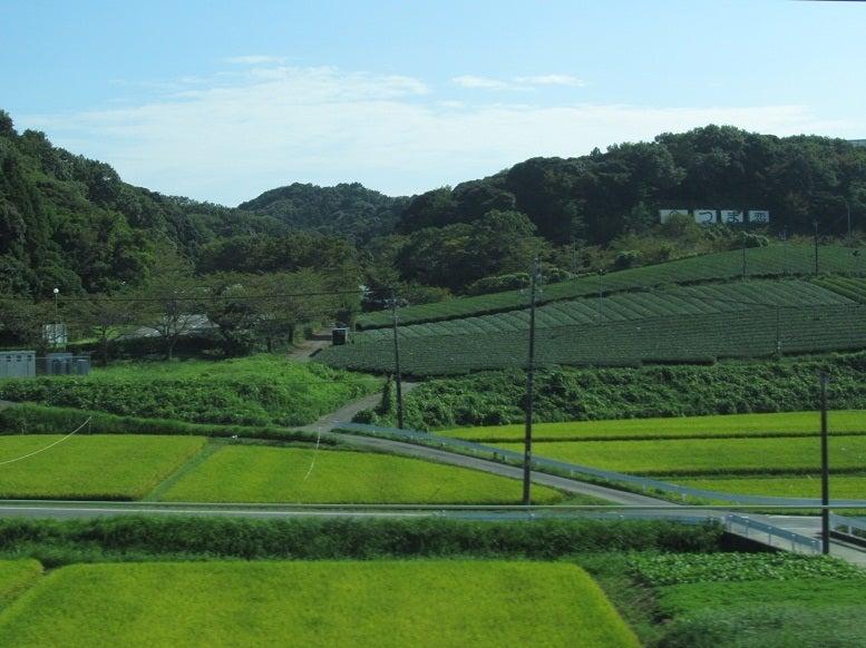 ⇒掛川 つま恋 茶畑 新幹線から