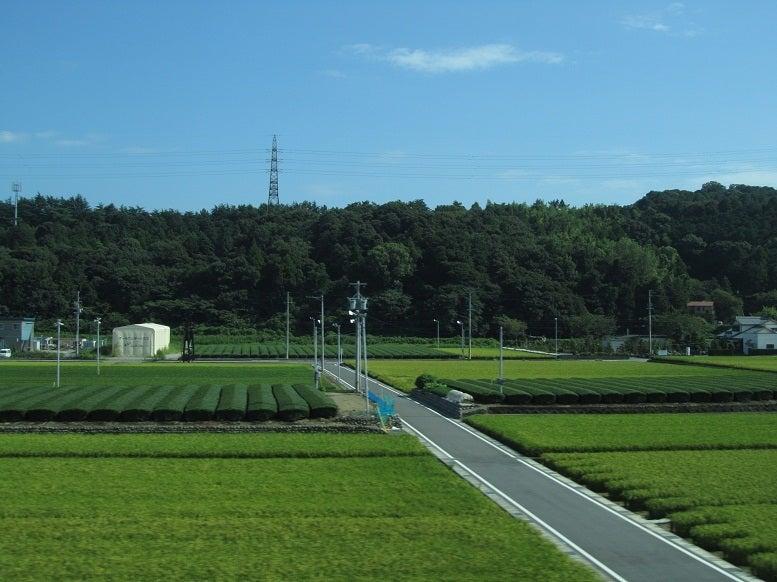 掛川 茶畑 新幹線から