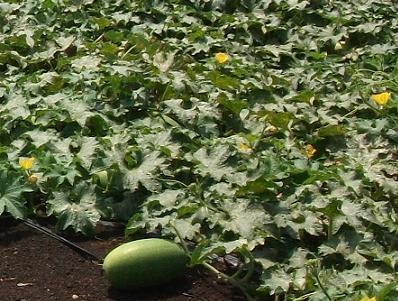 農業のトータルコーディネータ  イノウエ農商事のブログ-09012