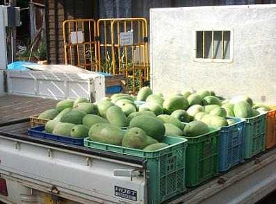 農業のトータルコーディネータ  イノウエ農商事のブログ-09013