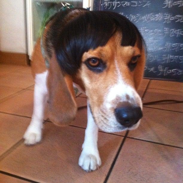 $arcoiris blog-前髪犬
