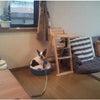 渋川市 犬のしつけ(自宅訓練)の画像