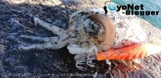 D_Groove Blog/No Fishing No Life.-Gyonet230