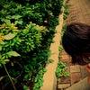 ひまわりが咲いたの画像