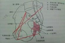 骨盤 | パーソナルトレーナーのお勉強