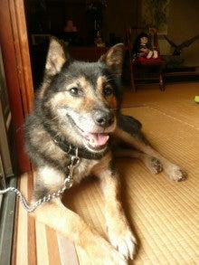 東北動物レスキュー 長崎の保健所の命を救う会の代表のブログ-ジジ