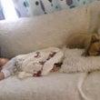 生後2カ月&予防接種