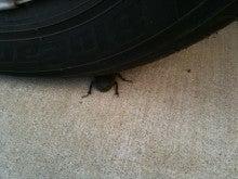 タイヤの下に・・・