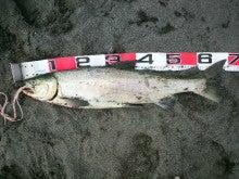 ノッチのドタバタ釣り日誌-2011091211520000.jpg
