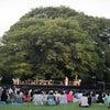 藤澤ノリマサさんの ちんじゅの森コンサート 2011の画像