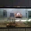 上野動物園にいってき…