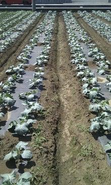$都市農業 ぶっちゃけブログ 農業って儲かンの?-未設定