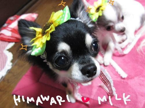 ★☆ モカ and ミルク ☆★