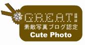 素敵写真ブログ認定されました☆