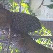 蜂の巣駆除