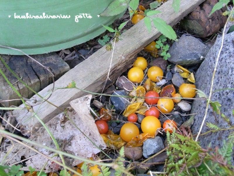 kushiroshirorisuな日々-荒れた庭から2